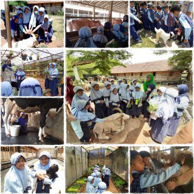Fieldtrip D Kandang Ar-Rayhan 2019 3